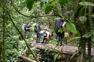 explore the amazon rainforest in Cuyabeno National Park with dracaena tours in Ecuador