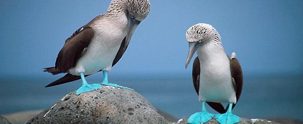 Galapagos Island hopping day excursions